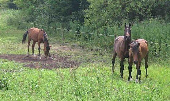 elektrické ohradníky pro koně